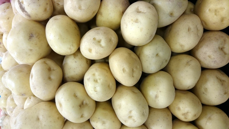 tuberosum: Yellow Gold Potato, Solanum tuberosum, cultivated herb with golden yellow tubers used as vegetable