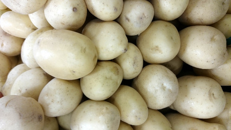 sized: Solanum tuberosum, white rose potato, cultivar with medium sized tubers, light tan delicate skin, flesh white rose, firm and creamy, less sweet, suitable for mashing, boiling, frying and baking