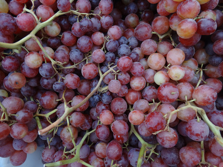 seedless: Vitis vinifera Flame Seedless, heavy producer cultivar producing medium large seedless reddish fruits, juicy and sweet in taste, long shelf life