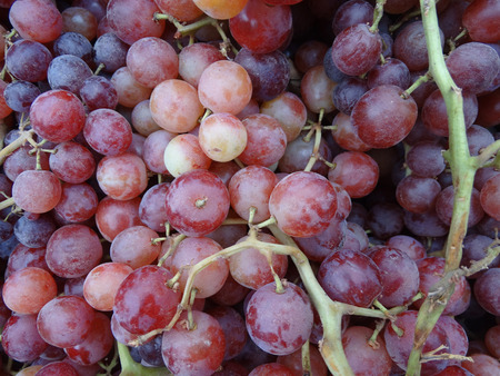producing: Vitis vinifera Flame Seedless, heavy producer cultivar producing medium large seedless reddish fruits, juicy and sweet in taste, long shelf life