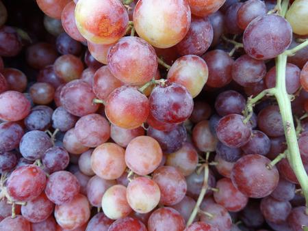 producer: Vitis vinifera Flame Seedless, heavy producer cultivar producing medium large seedless reddish fruits, juicy and sweet in taste, long shelf life