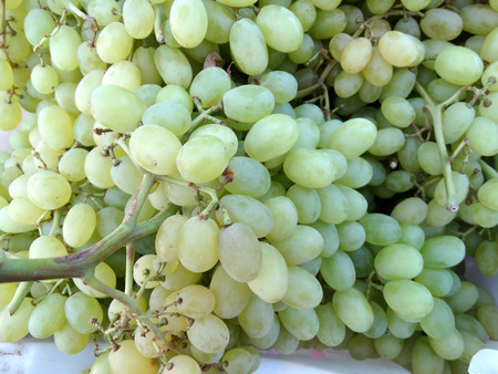 sultana: Thompson Seedless, Sultana, Vitis vinifera, grape cultivar with pale green seedless fruits of medium size used as table fruit and for making raisins or kishmish Stock Photo