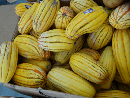 suitable: Delicata squash, Cucurbita pepo, sweet potato squash, peanut squash, oblong shaped small fruit with cream yellow skin skin with dark green stripes in grooves turning orange with age, suitable for baking and saute