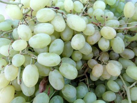 seedless: Thompson Seedless, Sultana, Vitis vinifera, grape cultivar with pale green seedless fruits of medium size used as table fruit and for making raisins or kishmish Stock Photo