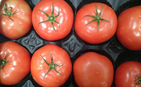 고기의: Beefsteak tomato, Beef tomato, Solanum lycopersicum, cultivar with thick skin and meaty flesh with numerous seeds, suitable for slicing.