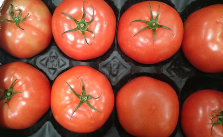 meaty: Beefsteak tomato, Beef tomato, Solanum lycopersicum, cultivar with thick skin and meaty flesh with numerous seeds, suitable for slicing.
