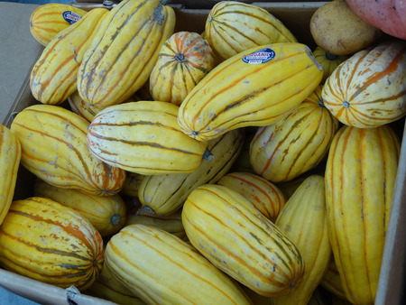 saute: Delicata squash, Cucurbita pepo, sweet potato squash, peanut squash, oblong shaped small fruit with cream yellow skin skin with dark green stripes in grooves turning orange with age, suitable for baking and saute