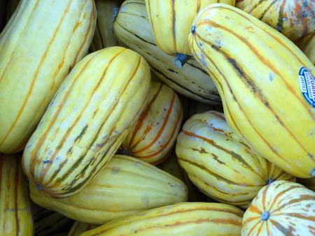 적합: Delicata 스쿼시, 호박 속을 pepo, 고구마 호박, 땅콩 스쿼시, 나이가 오렌지를 돌려 홈에서 진한 녹색 줄무늬가있는 크림 노란 피부의 피부에 직사각형 모양의 작은 과일, 스톡 콘텐츠