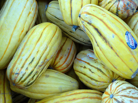 oblong: Delicata squash, Cucurbita pepo, sweet potato squash, peanut squash, oblong shaped small fruit with cream yellow skin skin with dark green stripes in grooves turning orange with age, suitable for baking and saute