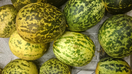resembling: Dosakaya, Cucumis melo subs agrestis var conomon, resembling golden cucumber but with green patches turning darker on ripening, flesh white, used in sambar and pachadi preparations