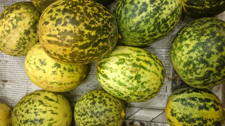 var: Dosakaya, Cucumis melo subs agrestis var conomon, resembling golden cucumber but with green patches turning darker on ripening, flesh white, used in sambar and pachadi preparations