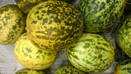 preparations: Dosakaya, Cucumis melo subs agrestis var conomon, resembling golden cucumber but with green patches turning darker on ripening, flesh white, used in sambar and pachadi preparations