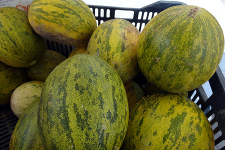 sized: Piel de sapo melon, Christmas melon, Cucumis melo inodorus, large sized melon up to 25 cm long with green skin with yellow to dark green patches and light green to white flesh with mild odor