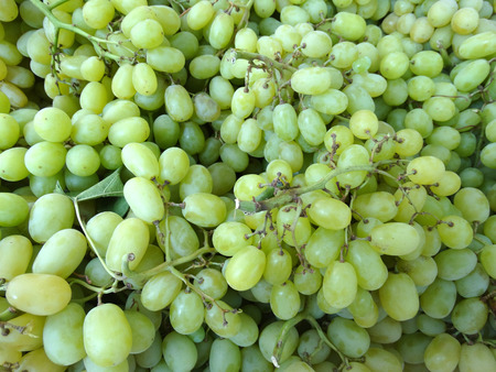 bunches: Vittis vinifera, Melisa grapes, cultivar with green juicy fruits in bunches without seeds, table fruit