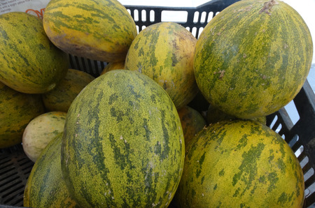 cm: Piel de sapo melon, Christmas melon, Cucumis melo inodorus, large sized melon up to 25 cm long with green skin with yellow to dark green patches and light green to white flesh with mild odor