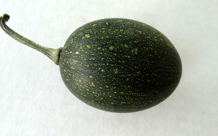 induce: Goblin eggs dark green, small ornamental fruits egg shaped with blackish green fruit with lemon yellow dots, with hard shell and the size of eggs, often used to induce hens for egg laying