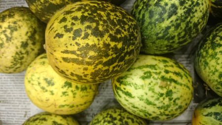 resembling: Dosakaya Cucumis melo subs. agrestis var conomon resembling golden cucumber but with green patches turning darker on ripening flesh white used in sambar and pachadi preparations