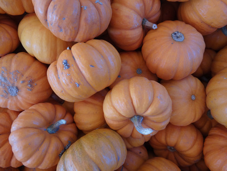 cm: Munchkins Cucurbita pepo mini pumpkins usually less than 10 cm in diam with orange red  skin with ridges and grooves orange red inside edible as well as  ornamental Stock Photo