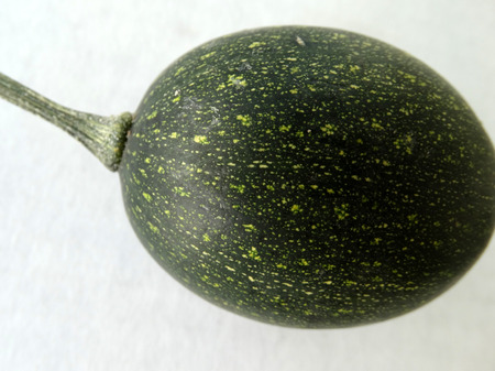 induce: Goblin eggs dark green small ornamental fruits egg shaped dark green nearly blackish in color with pale lemon yellow dots with hard shell and the size of eggs often used to induce hens for egg laying