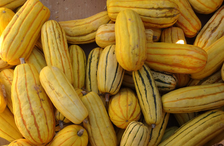 grooves: Delicata squash Peanut squash Cucurbita pepo crop with small cylindrical fruits with delicate yellow skin with green grooves turning orange as they mature cooked as vegetable or baked Stock Photo
