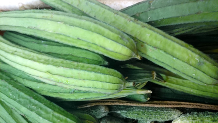 ridges: Ridge gourd Luffa acutangula a vine with yellow flowers and cylindrical green fruit with ridges white flesh used as vegetable dry one as bathroom sponge Stock Photo