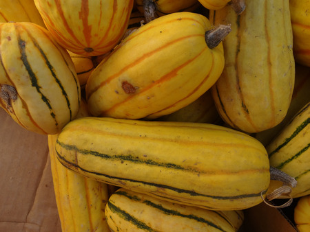 cucurbita: Delicata squash, Cucurbita pepo, sweet potato squash, peanut squash, oblong shaped small fruit with cream yellow skin skin with dark green stripes in grooves turning orange with age, suitable for baking and saute