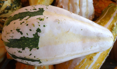 cucurbitaceae: Cucurbita pepo, Bicolor pear gourd, family Cucurbitaceae, ornamental gourd in various colours, pear shaped, white with broad green stripes in lower part, faint orange in upper part Stock Photo