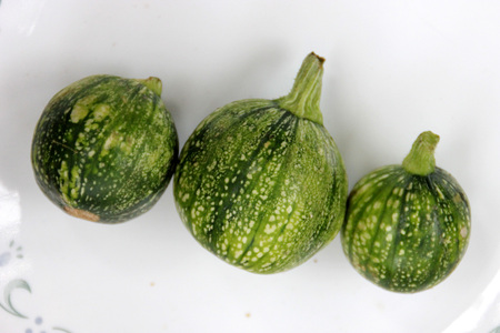 smaller: Cucurbita pepo, Rondini Tondo di Nizza, Tinda, 8 ball squash, cultivar with globose fruits usually smaller than 10 cm, used as vegetable when raw, in variety of skin markings Stock Photo