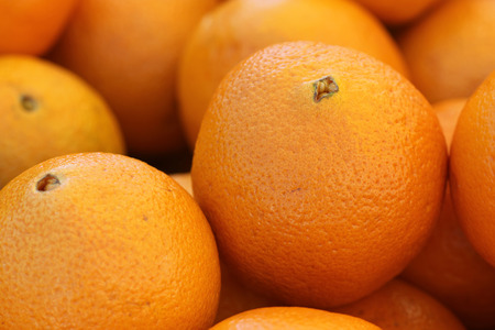 Citrus sinensis, Navel Orange, popular table fruit characterized by the growth of a second fruit at the apex, which protrudes slightly and resembles a human navel, result of mutation.