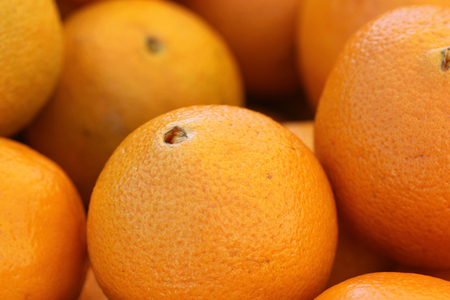 citrus     sinensis: Citrus sinensis, Navel Orange, popular table fruit characterized by the growth of a second fruit at the apex, which protrudes slightly and resembles a human navel, result of mutation.