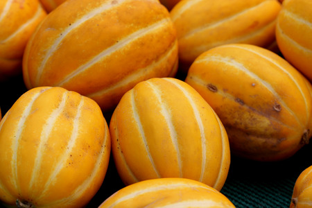Cucumis melo var conomon, Korean star melon, often placed in var. makuwa, golden yellow melon with white to silvery suture lines and crisp white sweet flesh Stock Photo