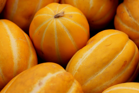 suture: Cucumis melo var conomon, Korean star melon, often placed in var. makuwa, golden yellow melon with white to silvery suture lines and crisp white sweet flesh Stock Photo