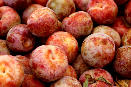 Prunus Dapple Dandy Pluot, later generation selection of interspecific hybrid between plum (P. salicina) and apricot (P. armeniaca) yellow green fruits with red mottling and creamy pink flesh