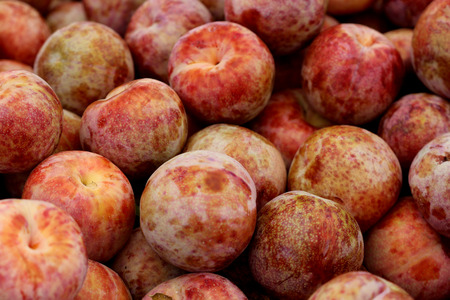 dandy: Prunus Dapple Dandy Pluot, later generation selection of interspecific hybrid between plum (P. salicina) and apricot (P. armeniaca) yellow green fruits with red mottling and creamy pink flesh