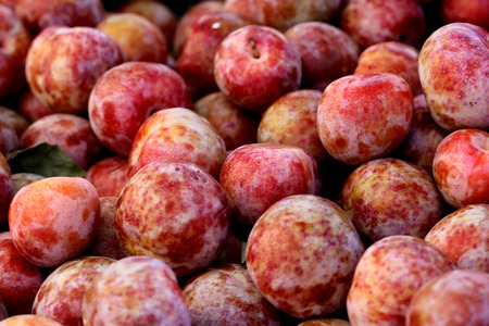mottling: Prunus Dapple Dandy Pluot, later generation selection of interspecific hybrid between plum (P. salicina) and apricot (P. armeniaca) yellow green fruits with red mottling and creamy pink flesh