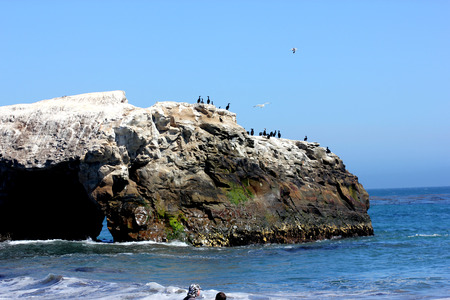 frequented: Bridge formation at Natural Bridges Beach California, frequented by sea gulls, surfing waves stricking along the rocks