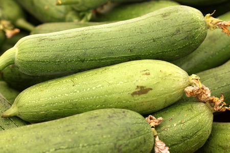 Luffa aegyptiaca, Sponge gourd, Egyptian cucumber, vegetable fruit on vine with green cylindrical fruits used as cooked vegetable