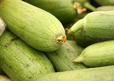 aegyptiaca: Luffa aegyptiaca, Sponge gourd, Egyptian cucumber, vegetable fruit on vine with green cylindrical fruits used as cooked vegetable