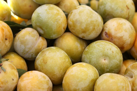 Flavor Queen pluot, Prunus Flavor Queen, interspecific plum apricot hybrid with greenish yellow skin and amber orange flesh with pleasant candy like sweet flavor
