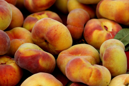 Prunus persica Donut, Donut peach, Flat peach, peach cultivar with flattened fruits usually produced in clusters, white flavorful sweet flesh