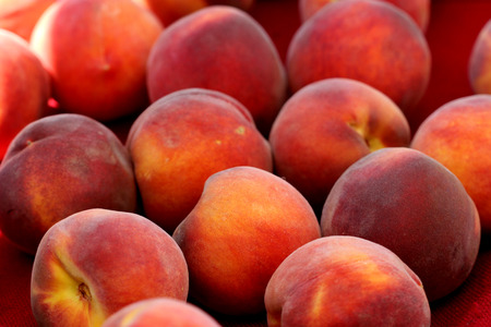 suitable: Santa Barabara peach, Prunus persica, yellow peach cultivar with red blush, soft yellow flesh, sweet and tasty with free stone, red near pit, suitable for warmer climates Stock Photo