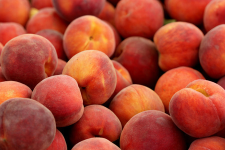 Santa Barabara peach, Prunus persica, yellow peach cultivar with red blush, soft yellow flesh, sweet and tasty with free stone, red near pit, suitable for warmer climates Stock Photo