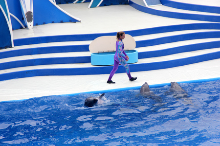 thrilling: Blue Horizons Dolphin Show, SeaWorld, San diego, California, USA with playful dolphins, flying birds and thrilling performers keep you fully entertaned