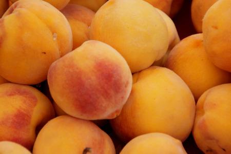 Prunus persica Yellow Cling Pfirsich, Sorte mit orange, gelb, große Früchte und ähnlich farbigen Fleisch saftig und süß schmecken, ähnlich aussehende außer Form und Größe zu Aprikose, clingstone Typ