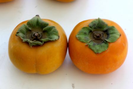 diospyros: Fuyu Persimon, Diospyros kaki Fuyu, Japanese cultivar with depressed globose fruit yellow when young maturing orange, nonastringent cultivar. Stock Photo