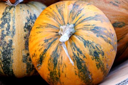 Kakai dýně, tykev obecná, střední 2-4 kg téměř kulaté hladké dýně se žlutou kůží s několika zelenými skvrnami a pruhy, dobré pro dekoraci, trupu, méně semen pražené. Reklamní fotografie