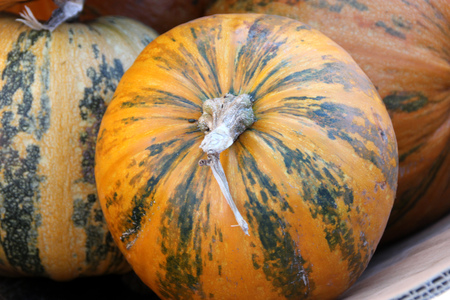 nearly: Kakai Pumpkin, Cucurbita pepo, medium sized 2-4 kg nearly round smooth pumpkins with yellow skin with few green patches and stripes, good for decoration, hull-less seeds roasted.