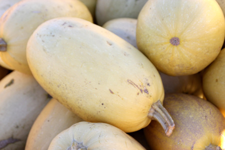 flesh colour: Spaghetti Squash, Cucurbita pepo, cultivar with oblong fruits ivory to orange yellow in colour, smooth skin and yellow flesh, baked or cooked.