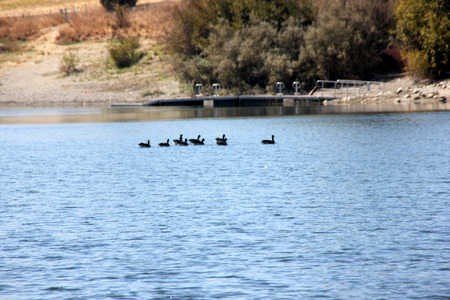 Quarry Lake, Fremont, California recreational area with facilities for swimming, fishing and boating, with several birds around, marked area for swimming along the beach.