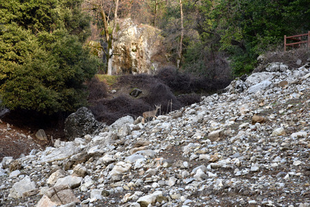 especially: Debris slides on slopes of Shasta caverns in Shasta-Trinity National Forest, hazardous especially when rainy condition. Stock Photo
